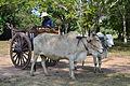201312181112a (Hartmann Linge) Sukhothai Si Chum.jpg