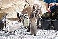 2015-05-24 Vogelpark Marlow 19.jpg