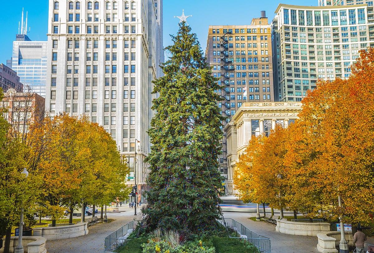 chicago christmas tree wikipedia