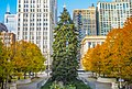 20151205 ChicagoChristmasTree.jpg
