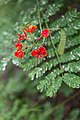 2016 Singapur, Ogrody botaniczne (031).jpg