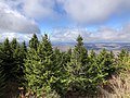 2019-10-27 11 56 24 View west-northwest across a Red Spruce forest from the observation tower on Spruce Knob in Pendleton County, West Virginia.jpg