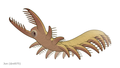 20191118 Megadictyon cf. haikouensis.png