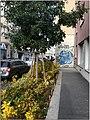 2020 10 26 Wien IMG 2903 (50562610181).jpg