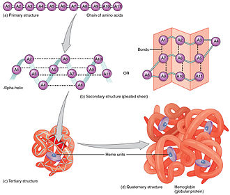 Protein folding - All forms of protein structure summarized.