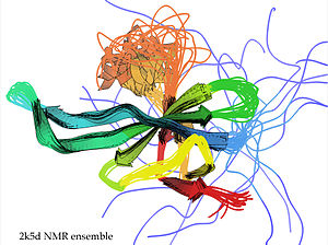 Structure validation -  NMR structural ensemble for PDB file 2K5D, with well-defined structure for the beta strands (arrows) and undefined, presumably highly mobile regions for the orange loop and the blue N-terminus
