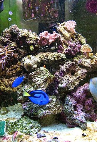 Marine aquarium - A marine aquarium