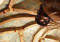 758 Kościół Garnizonowy. Foto Barbara Maliszewska.jpg