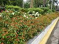 8095jfQuezon Memorial Circle City Monumentfvf 20.JPG