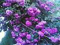 ANkara incek roses - panoramio.jpg