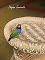 A Captive Pet In India.jpg