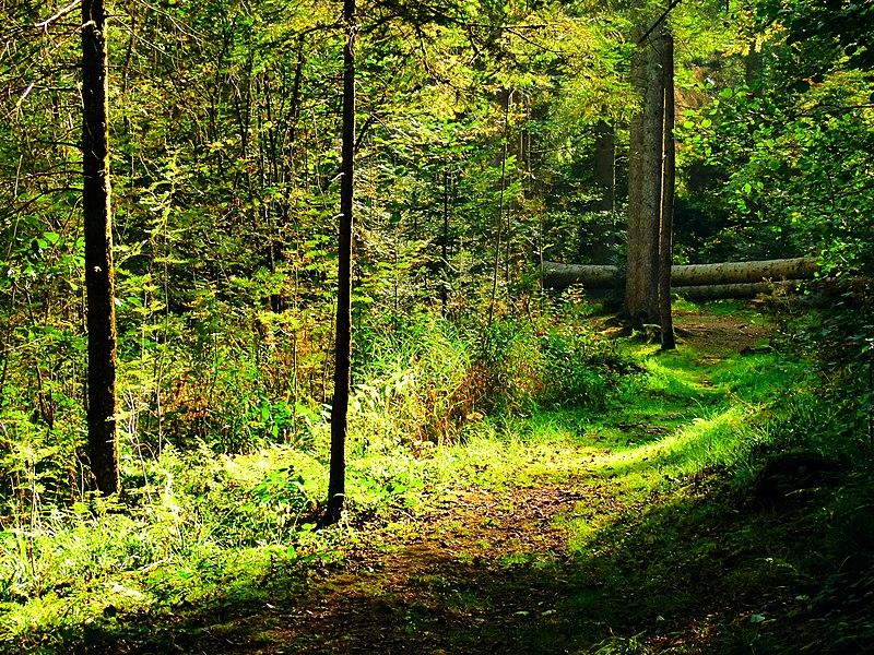 File:A Glade - panoramio.jpg