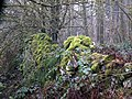 A Moss Covered Boundary Wall - geograph.org.uk - 1141536.jpg