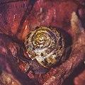 A Snail On An Autumn Leaf (88705043).jpeg