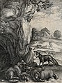 A fox is facing a wolf outside its lair surrounded by its pr Wellcome V0023004.jpg