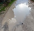 A puddle in Akamas Peninsula, Cyprus.jpg