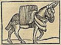 A saddled horse (or mule) from India, Cosmographia (1544) by Sebastian Münster.jpg
