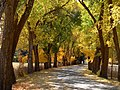 Abbey Road Fall Leaves HTA.jpg
