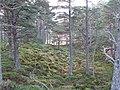 Abernethy Forest, Inchtomach - geograph.org.uk - 612792.jpg