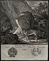 Above, a lynx standing in front of a large rock in a mountai Wellcome V0021114.jpg