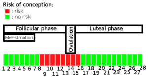 Schematic indicating the fertile period of a woman Abstinence during fertile period.png
