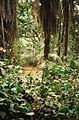 Abuko Nature Reserve (4380022389).jpg