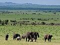 African Elephant (3075429899).jpg