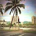 Ala wai palms - panoramio.jpg