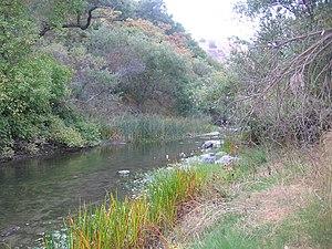 Alameda Creek - Alameda Creek in Niles Canyon