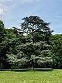 Albero in Villa Ghirlanda.jpg