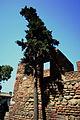 Alcazaba-IMG 2777.jpg