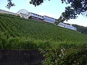 Alzenau - The Schlossberg with vineyard