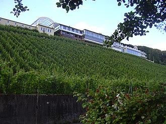 Alzenau - The Schlossberg with vineyard