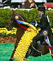 American Saddlebred (3002796162).jpg