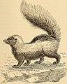 American types of animal life (1894) (17539215274).jpg