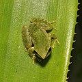 Amphibians (15393295807).jpg