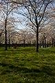 Amsterdamse Bos 04-2013 - panoramio.jpg