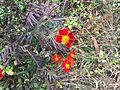Ananta Dhungana Flower.jpg