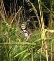 Andechs, Bäckerbichl (Fauna) HB-06.jpg