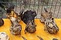 Animal Paws at Beijing Street Market (15832677082).jpg