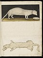 Animal drawings collected by Felix Platter, p2 - (74).jpg