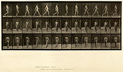 Animal locomotion. Plate 11 (Boston Public Library).jpg