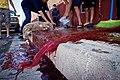 Animal sacrifice at Eid at Adha 9.jpg