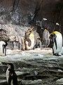 Antarctica- Empire of the Penguins (37286499195).jpg