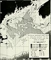 Application of remote sensing methods for tracking large cetaceans - North Atlantic right whales (Eubalaena glacialis) (1992) (19750658981).jpg