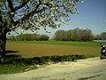 April - Kaiserstuhl View - 2016 Spring - panoramio (1).jpg