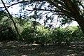 Aromas profundos - panoramio.jpg