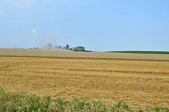 Asbury Township, Gallatin County, Illinois - Wheat harvest along New Haven-Shawneetown Road
