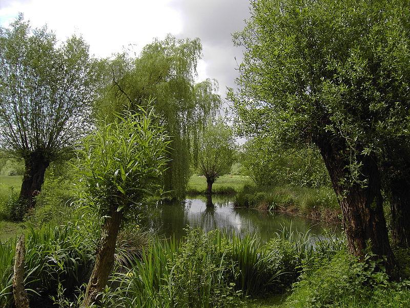 В долине реки Эрфт под Нойсом. Фото: Википедия, автор Perlblau