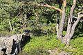 Auf der Nonnenfelsen im Zittauer Gebirge..2H1A1585WI.jpg